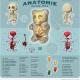 Teistmoodi anatoomia.