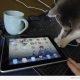 Kass avastab iPadi