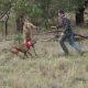 Kuidas päästa koer känguru haardest