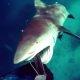 NOPE, mina ei lähe enam kunagi ujuma – hai ründab Austraalias sukeldujat