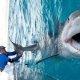 Kalamees püüab kinni hiiglasliku, 4.2m pikkuse ja 450kg kaaluva hai