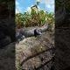 Alligaator võtab otsetee läbi turistipaadi