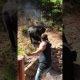 Isa üritab maiasmokast karu käest oma steiki ja krevette päästa