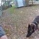Andke sellele koerale maiust! K9 läheb kahtlusalust jälitades politseinikust lahku, püüab päti kinni