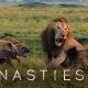 Uskumatud kaadrid lõvist kes üritab kaitsta end 20 hüääni rünnaku eest