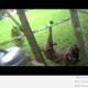 Politseinik päästab koera ja saab üllatuse (video)