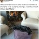 Kass Milo lõhub põrandalambi pirni ja saab elektrit – kõige pingelisem asi, mida ma see aasta näinud olen
