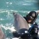 Kurb: kaabakad lahutavad Jaapanis noored delfiinid emadest, et nad delfinaariumitele müüa