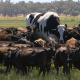 See lehm on hiiglaslik!