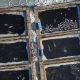 Ligi sadat mõõk- ja valgevaala hoitakse vangistuses, kuniks Venemaa valitsus vastusi otsib
