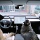 """Tesla tutvustas uut funktsiooni – """"koera režiim"""""""